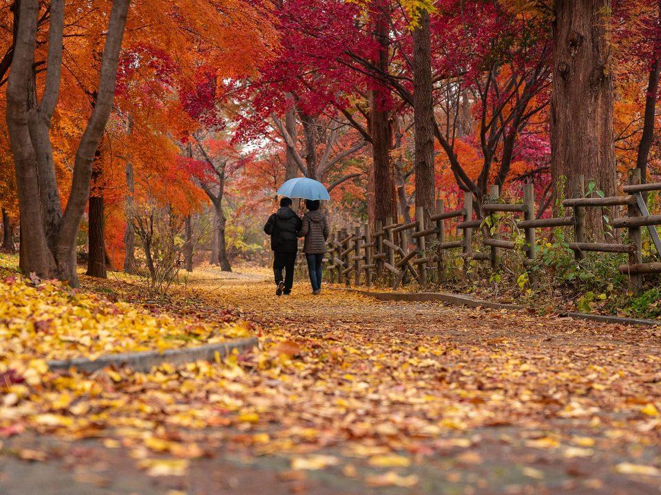 otoño: vuelta al cole